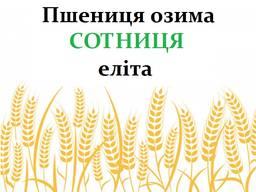 Насіння озимої пшениці Сотниця еліта