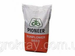 Насіння соняшника   П63ЛЕ113 (P63LE113) семена подсолнуха пионер pioneer