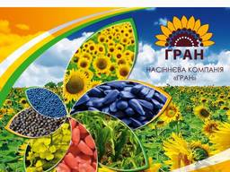 """""""ГРАН"""" пропонує гібриди соняшника, кукурудзи, рапсу"""