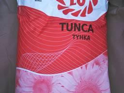Насіння соняшнику Тунка, імпорт.