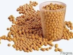 Насіння сої ГМО