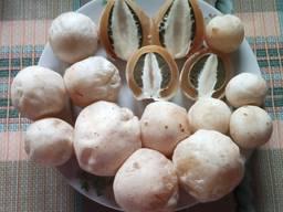 Настоянка з грибів Веселка