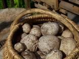 Настойка гриба веселка від виробника - фото 5