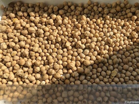 Нут семена (семенной материал)