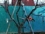 Обрезка деревьев - фото 2