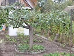 Обрезка деревьев, измельчение веток Расчистка участков