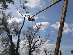 Обрезка деревьев Кронирование деревьев вырубка зарослей
