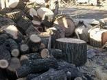 Обрезка деревьев, спил, кронирование и дробление Ирпень - фото 1