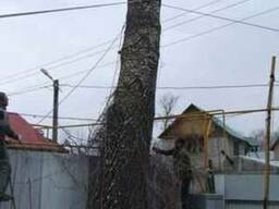 Обрезка деревьев,спил,кронирование,удаление деревьев Киев.