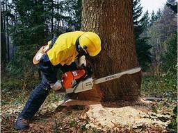 Обрезка деревьев. Уборка корней. Выкорчевка сада. Корчевание