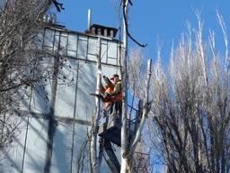 Обрезка хвойных деревьев Киев