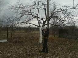 Обрезка, кронирование деревьев, обрезка сада