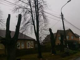 Обрезка сада и спил деревьев в Харькове.