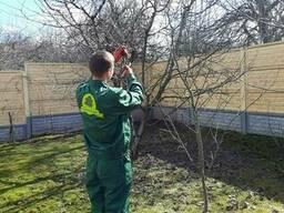 Обрезка сада, обработка и лечение деревьев