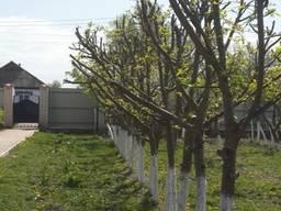 Обрезка сада, обрезка плодовых деревьев, спил, уборка, вывоз