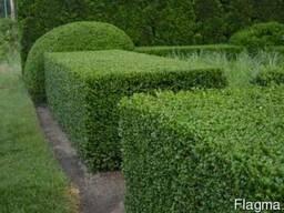 Обрезка сада в Кременчуге, обрезка деревьев, стрижка кустарн