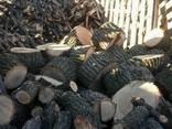 Обрезка деревьев, спил, кронирование и дробление Ирпень - фото 2