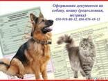 Оформление документов на собаку, кошку (родословная, метрика - фото 1