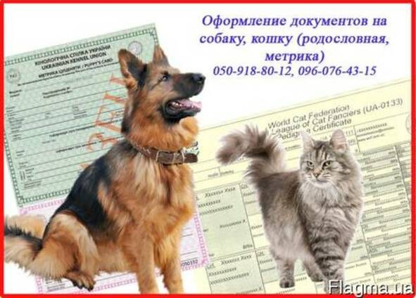 Оформление документов на собаку, кошку (родословная, метрика