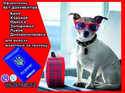 Оформление вет документов для вывоз собаки из Украины в Евро
