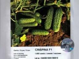Огурец «Криспина» F1 1 000сем. Нунемс (Nunhems®)