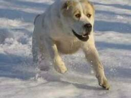 Охрана с собаками цена Киев