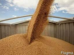 Оказываем услуги по очистке и калибровке зерновых,масличных.