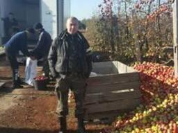 Оказываем услугу по переработке яблок