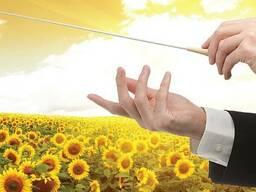 ОПЕРА ПР (OPERA PR) - насіння соняшнику