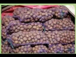 Оптом картофель продам