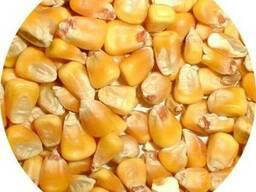 Оптом кукурузу любого качества - photo 1