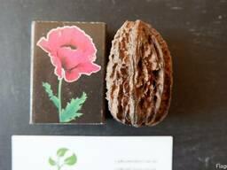 Орех серый семена (10 штук) для выращивания саженцев, горіх