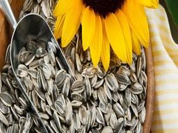 Organic Sunflower Kernels