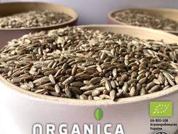 Жито органічне ProOrganica, 1кг пакет, сертифікат Органік Стандарт
