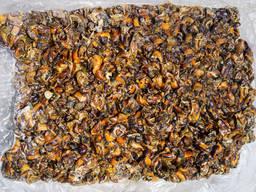 Отходы кормовые от переработки Рапаны - фото 3
