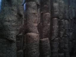 Отработанный блок гриба вешенки
