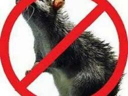 Отрава от грызунов, родентицид от крыс и мышей.