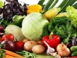 Семена овощи - фото 1