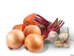 Овощи: Морковь, лук, свекла, капуста.
