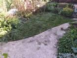 Озеленение. Газон сеяный и рулонный. Покос, аэрация газона. - фото 2