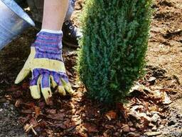 Озеленение, высадка и обрезка деревьев, газоны, ландшафты.