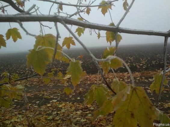 Пахотная земля сельхозназначения - аренда/продажа