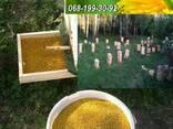Пыльца пчелиная, цветочная пыльца, обножка. Продам пыльцу