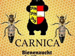 Пчеломатка Карника от Региональной ассоциация пчеловодства Каринтии