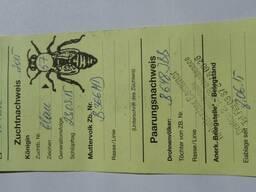 Пчеломатки, плодные матки Бакфаст B 366(MD) ИО