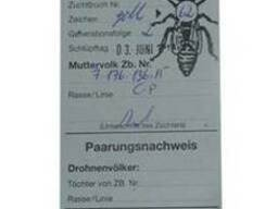Пчеломатки, плодные матки Карника Пешец (Peschetz)