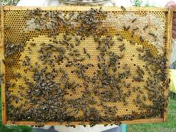 Пчелопакеты, бджолопакети, пчелы, бджоли