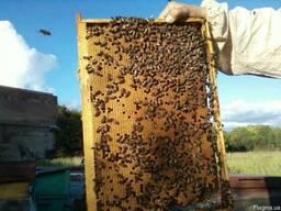 Пчелопакеты карпатской породы 5 рамочные
