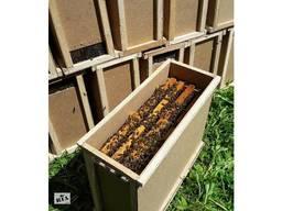 Пчелопакеты с доставкой, матки 2020 года