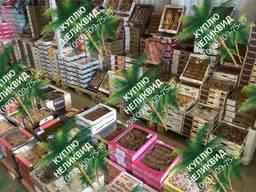 Печенье, кексы, пряники, вафли куплю оптом уценку, брак, неликвид, просрочку